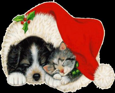 Hund und Katze unter der Weihnachtsmütze, Foto: Pixybay / Jo-B