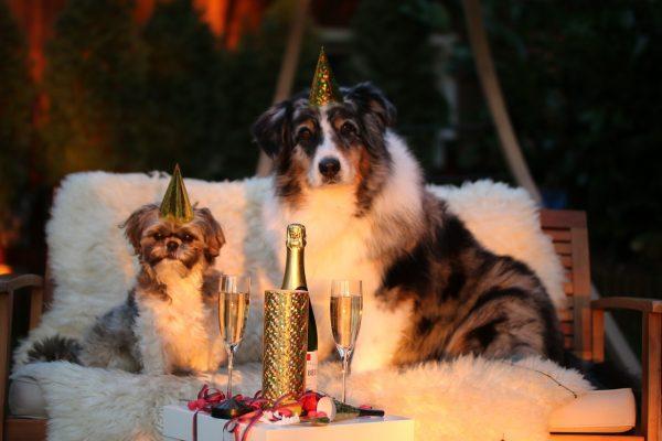 Zwei Hunde feiern Silvester - Foto: Pixabay / markito