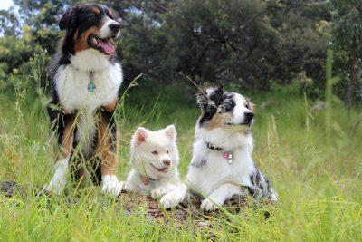 Hundewelpen (Foto: Pixabay / Spiritze)
