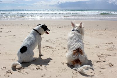 Hunde am Strand (Foto: Pixabay / AnnerleyHub)