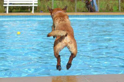 Hund springt in Schwimmbecken (Foto: Pixabay / 825545)