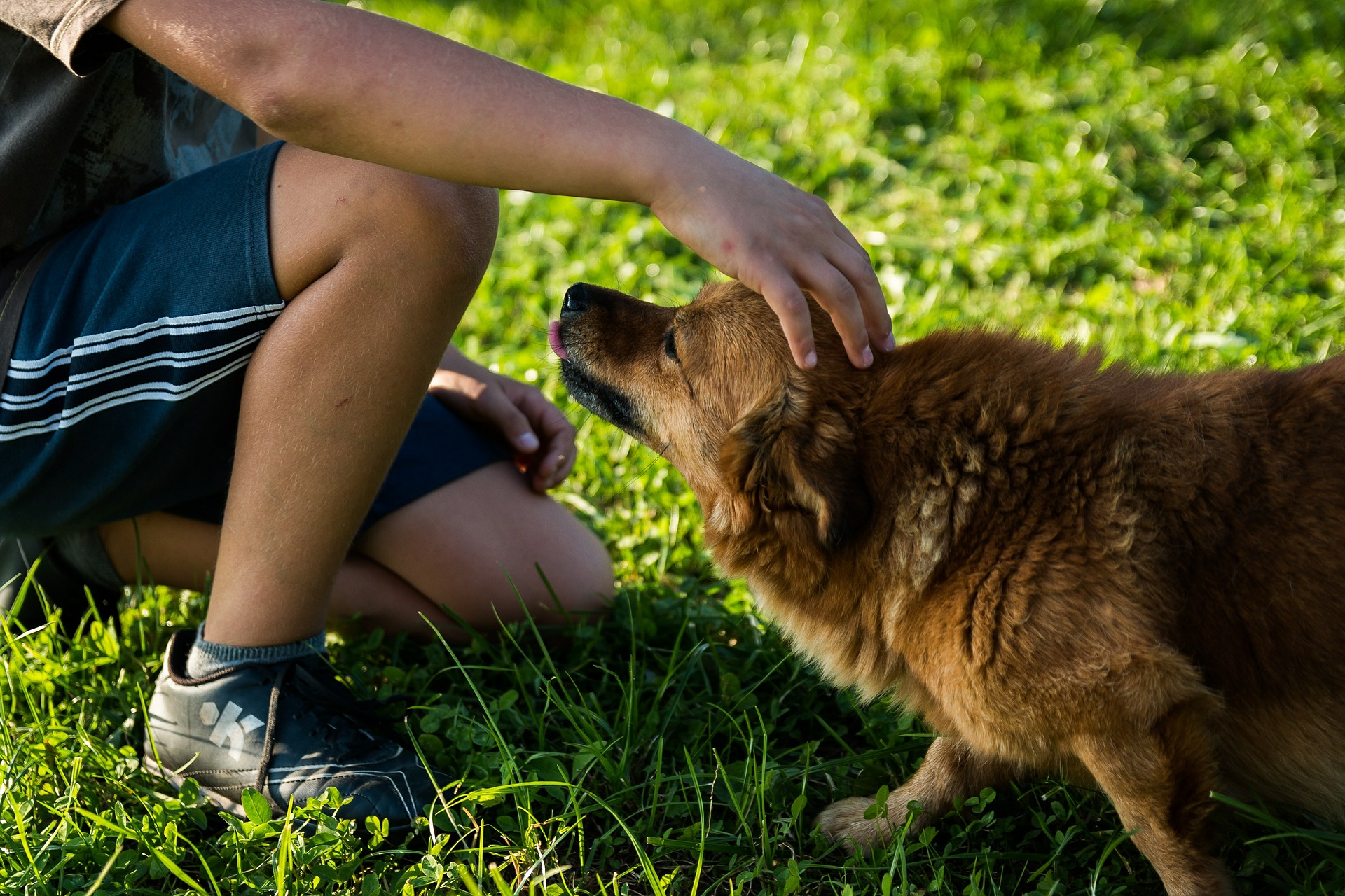 Junge streichelt Hund (Foto: Pixabay/jarmoluk)
